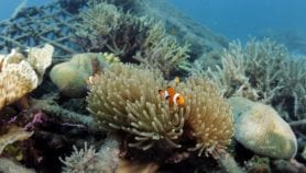Indian Ocean warming reduces marine life by 20 per cent