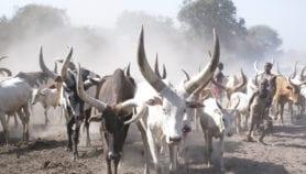 Kenyan team leads plans for livestock genebank