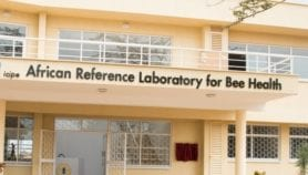 New lab launched to protect bees, improve food security