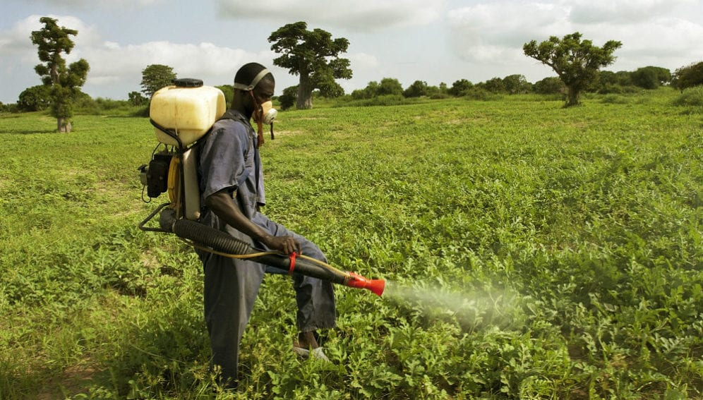 A man sprays pesticide to prevent the spread of locusts