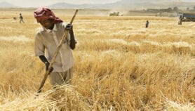 Project using R&D is changing  wheat farming in Africa
