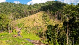 Mountainous regions suffer biodiversity loss