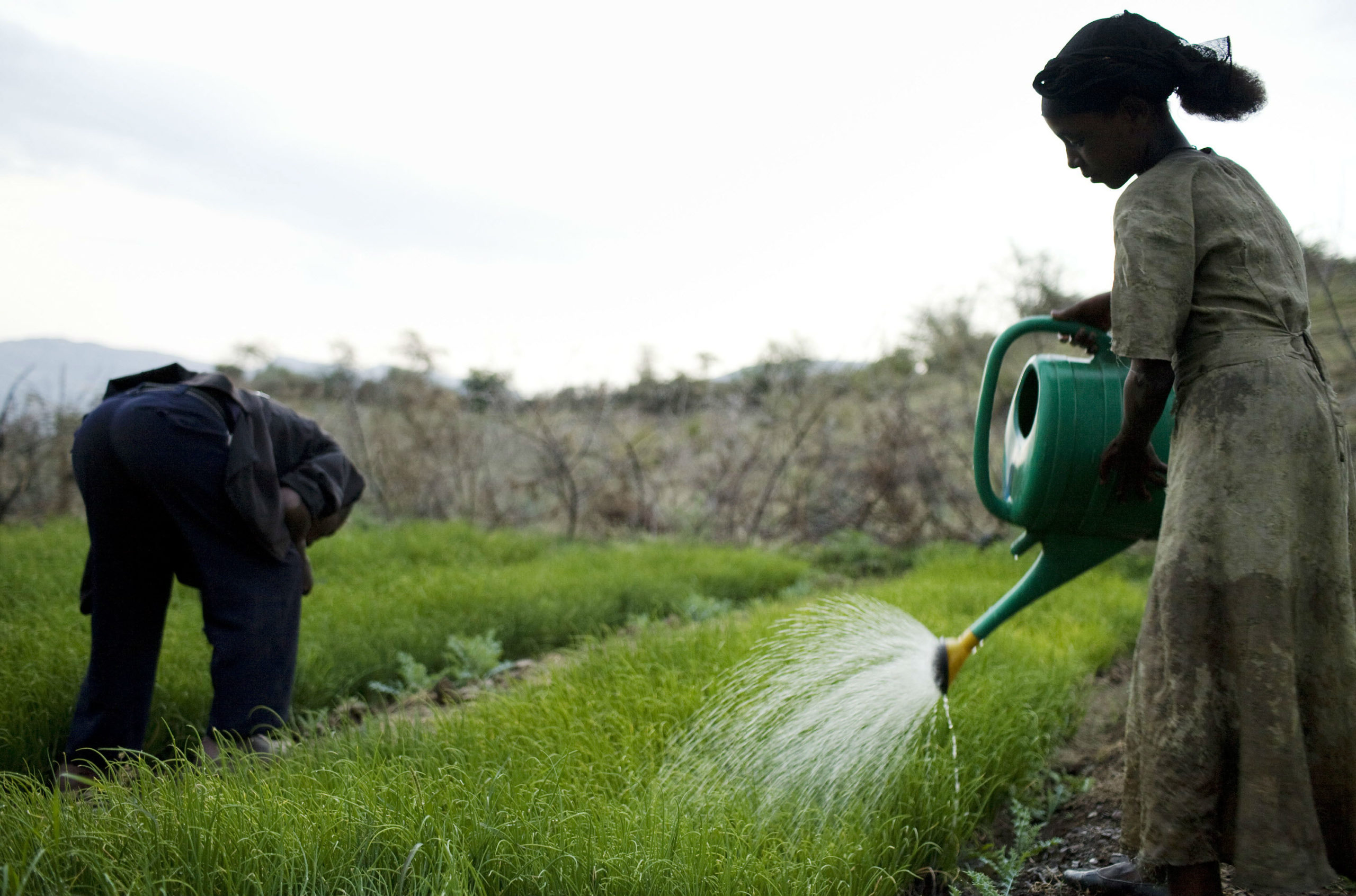 Boosting R&D capacity for sustainable agriculture