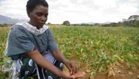 Q&A: Promoting gender and agriculture research