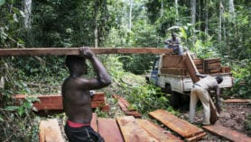 Poor nations' economies grow with rising deforestation
