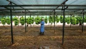 Addressing GMOs misinformation