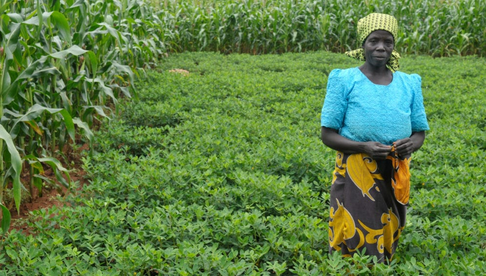 Intercropping_Malawi_Flickr_CIMMYT_4169x2780