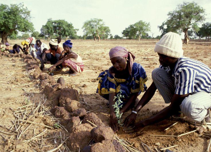 Women planting trees 1