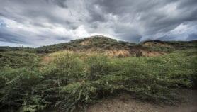 Tackle invasive species to restore degraded landscapes