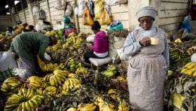 Food safety projects in Africa benefiting donor nations