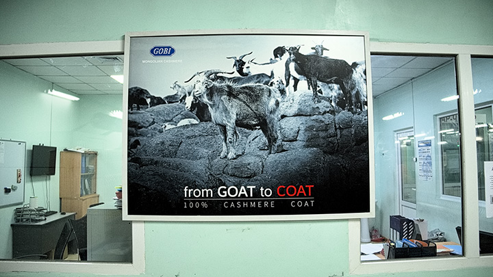 """From goat to coat"". Cashmere is a profitable resource threatened by cheap imports and environmental changes challenging production for most nomads. Since 1960s, the number of goats rose from 4.5 to 23 million, leading to overgrazing and falling wool prices. Will the nomads adapt to the new, competitive, market?"