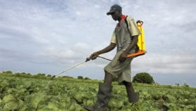 Unregistered herbicides use rampant among smallholders