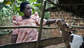 Invest in smallholders, R&D to spur food security