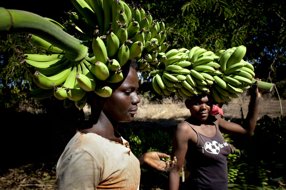 Project improves food security in six African nations