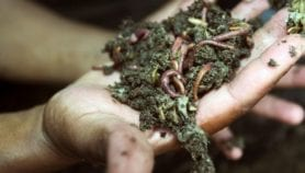 Earthworms helping smallholders increase crop yields