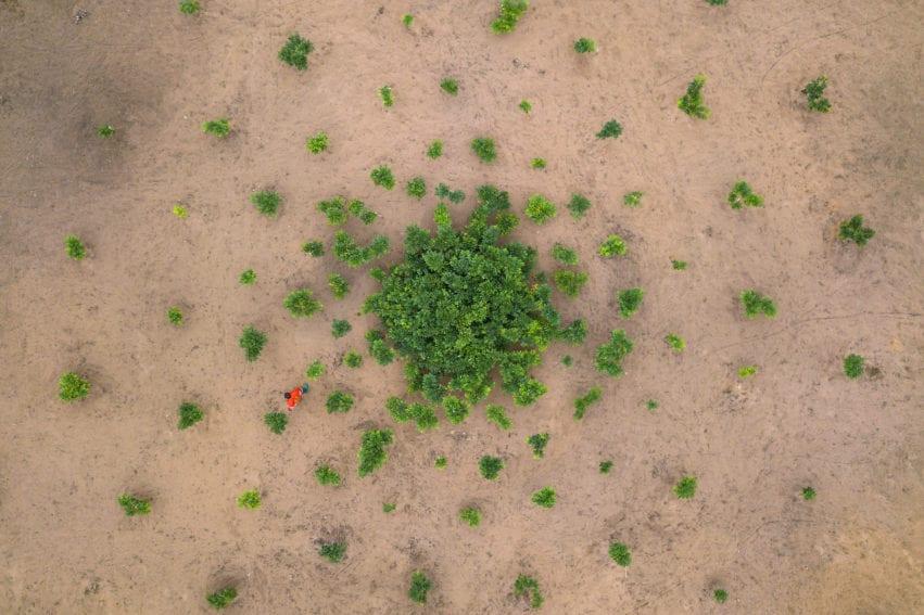 Afrormosia growing scheme