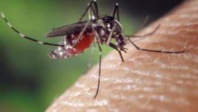 Zika known for abnormal small heads 'found in Africa'