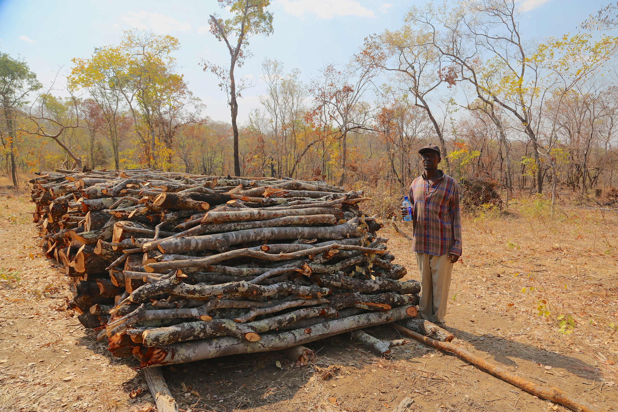 Growing extra trees, shrubs raises smallholders $50/year