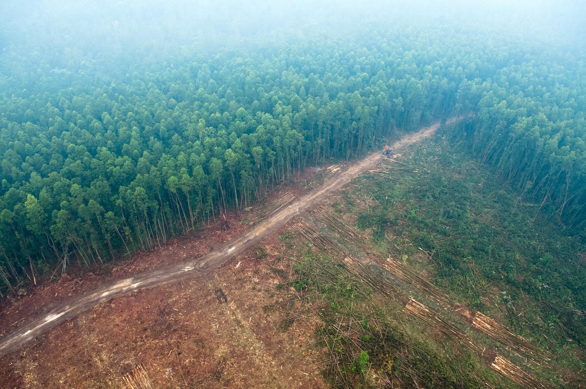Global forest restoration hotspots identified