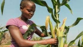 Africa's young agri-entrepreneurs nurturing the future