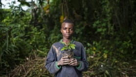 A third of Africa's plants 'under threat of extinction'