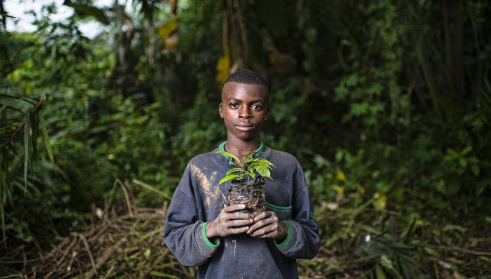 Planting Gnetum (okok)