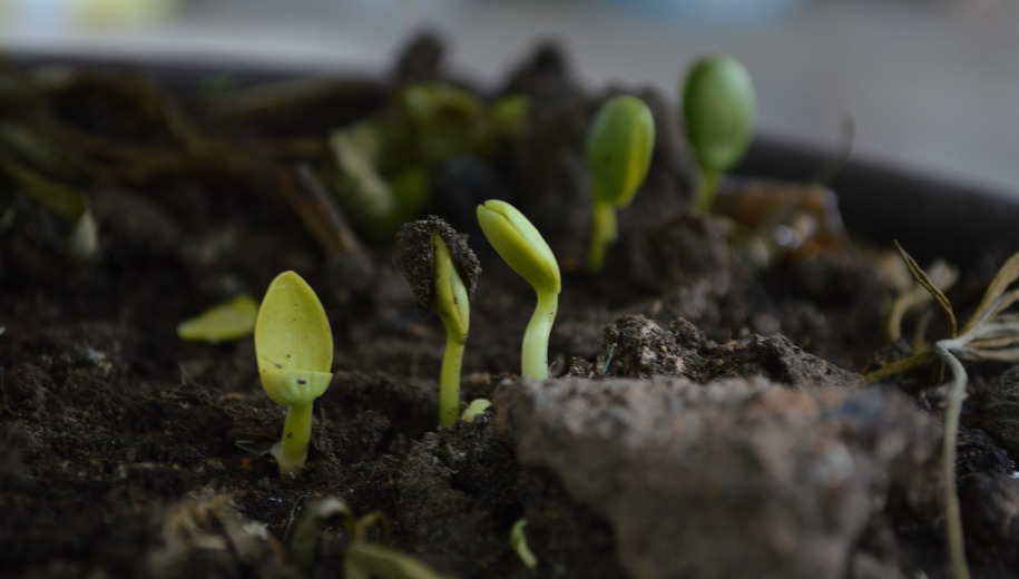 Small plants growing in soil