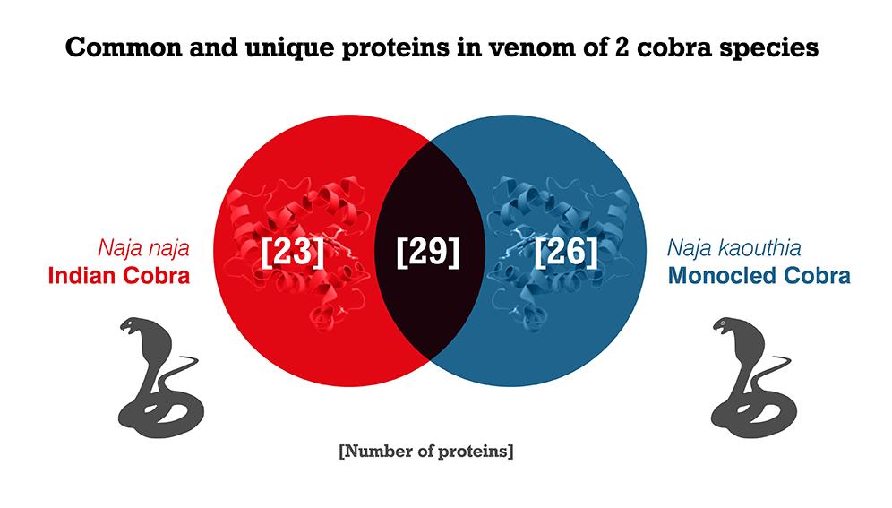 Snakebite - Efficacy of peptides 1